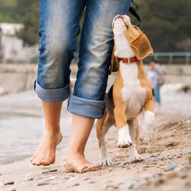schecker hundebedarf online