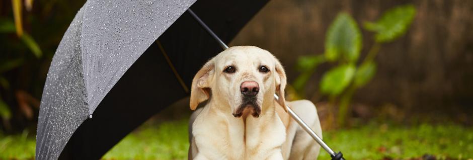 was zahlt hundehaftpflicht